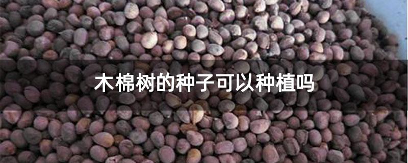 木棉树的种子可以种植吗