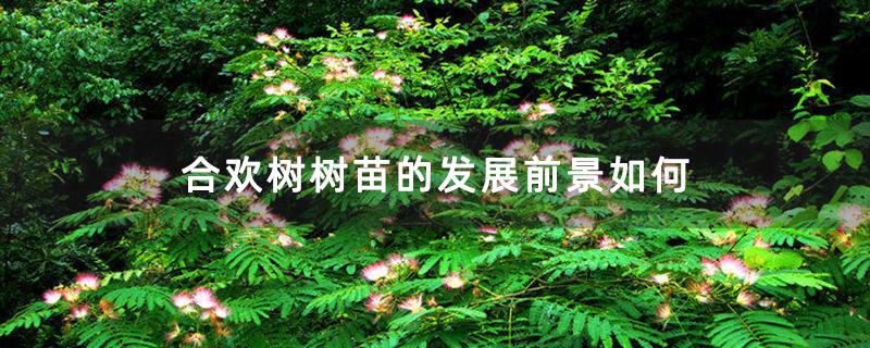 合欢树树苗的发展前景如何
