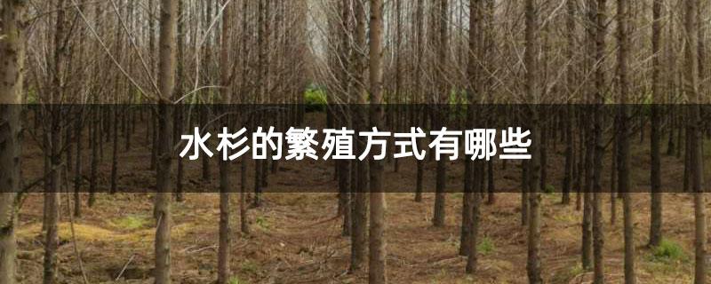 水杉的繁殖方式有哪些