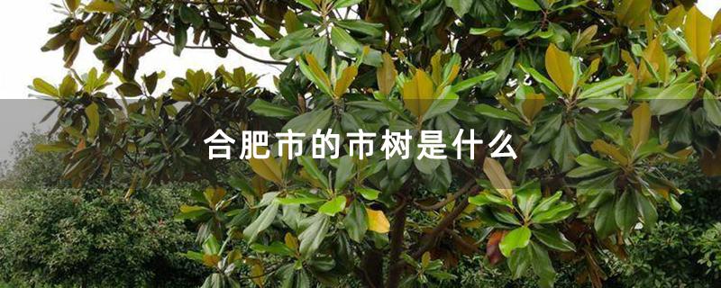 合肥市的市树是什么