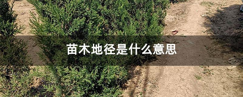 苗木地径是什么意思