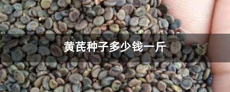 黄芪种子价格多少钱