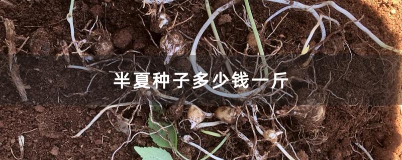 半夏种子多少钱一斤