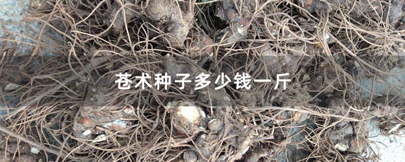 苍术种子多少钱一斤