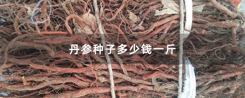 丹参种子多少钱一斤