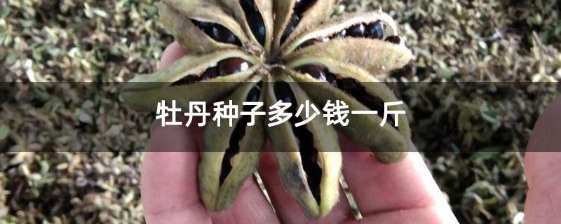 牡丹种子多少钱一斤