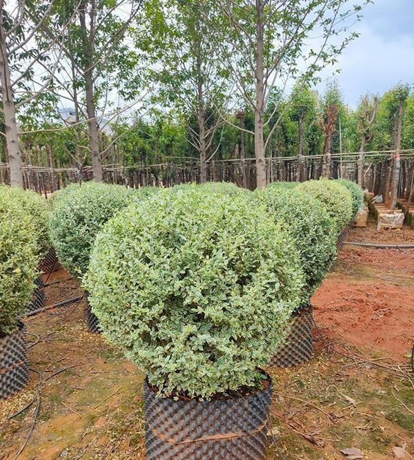 下半年这3类苗木比较好销,有货的苗农要抓住机遇!