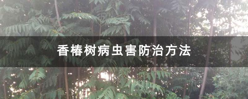 香椿树病虫害防治方法