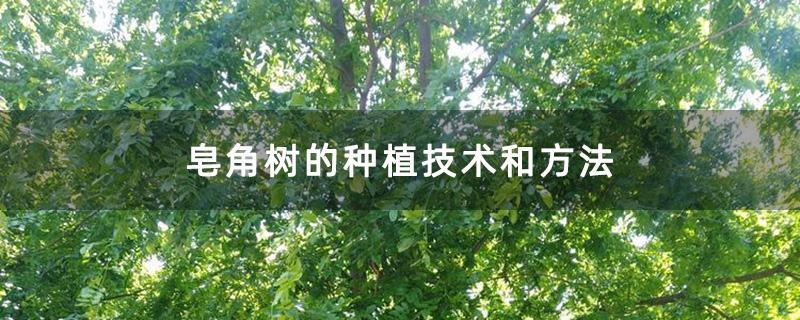 皂角树的种植技术和方法