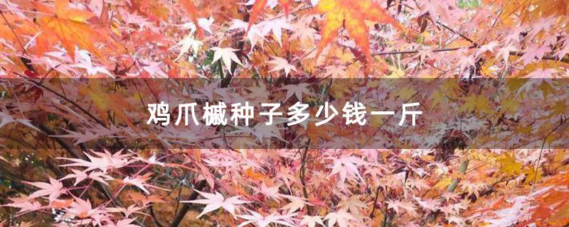 鸡爪槭种子多少钱一斤