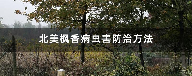 北美枫香病虫害防治方法