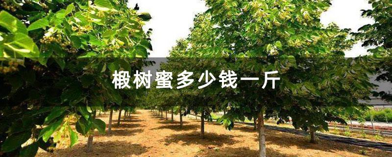 椴树蜜多少钱一斤