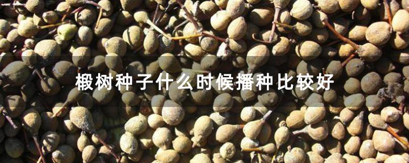 椴树种子什么时候播种比较好