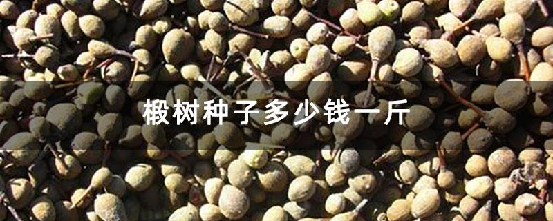 椴树种子多少钱一斤