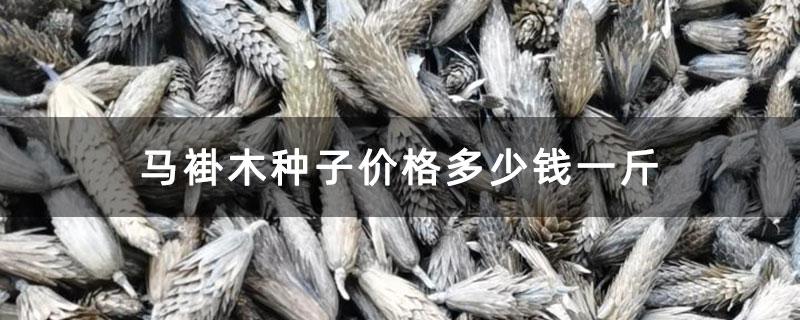 马褂木种子价格多少钱一斤