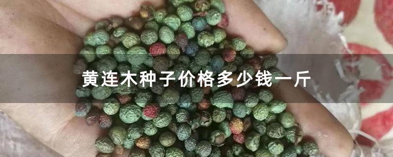 黄连木种子价格多少钱一斤