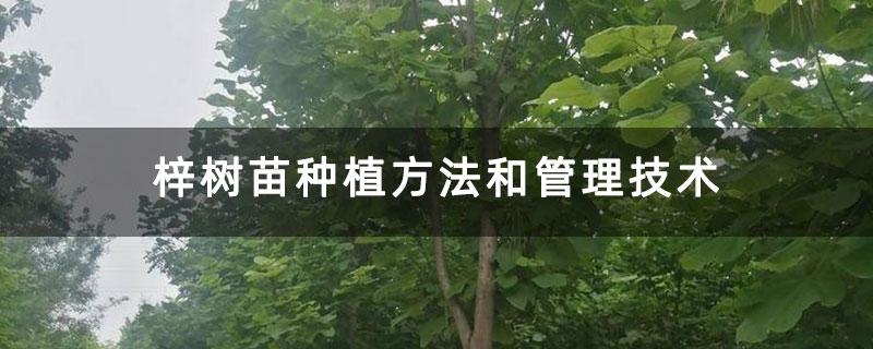 梓树苗种植方法和管理技术