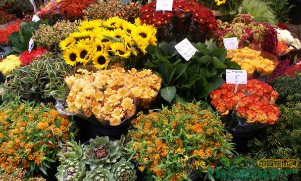 沈阳:夏季花期短鲜花市场下跌