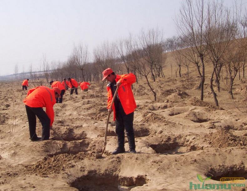 河北建义务植树基地2944个 今年将绿化造林420万亩