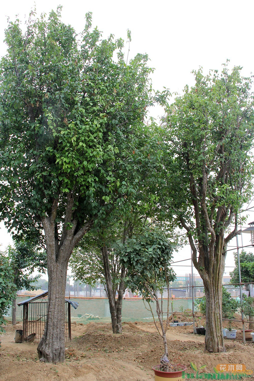 临沂市青山花卉园艺有限公司:规范化管理带来的品牌效益