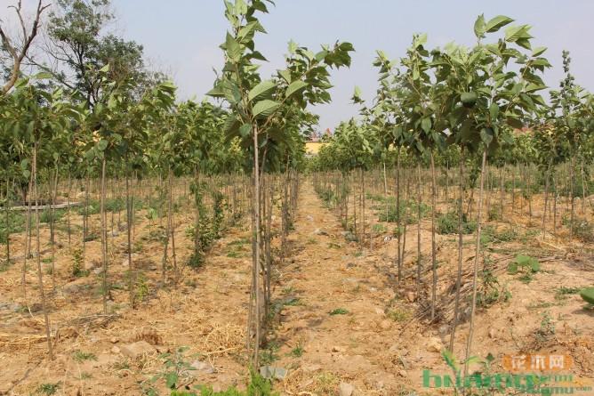 苗木敲开致富门——建大园林
