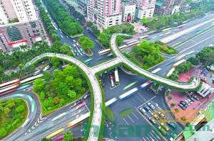 广州天桥绿化明年推新招! 新品种勒杜鹃花有望试种