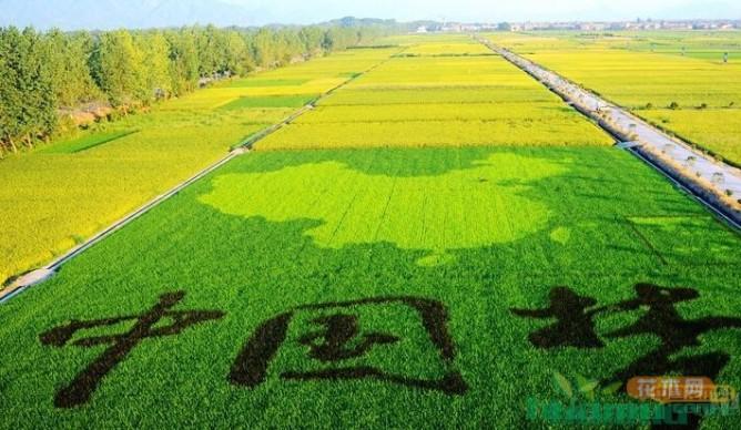 绿色中国——成也种苗 败也种苗
