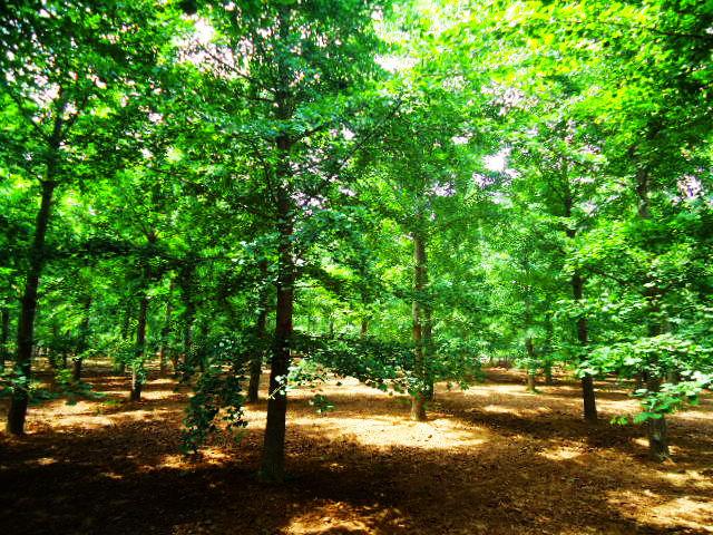 2017年,各地绿化造林规划相继出台啦~