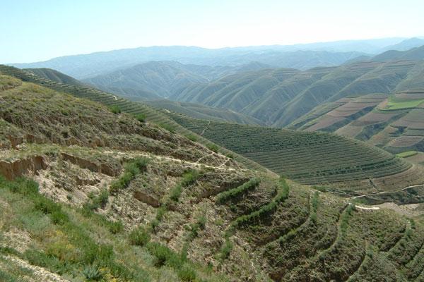 阜阳:绿化造林 大地增绿农民增收林业增效