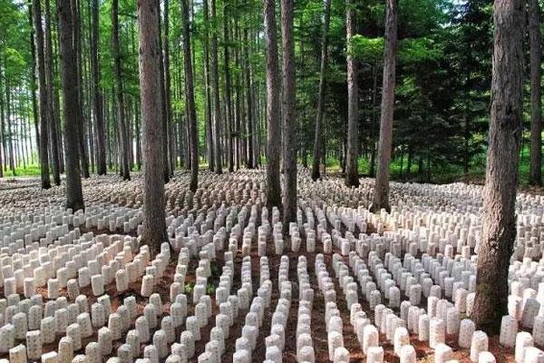发展林下经济,开辟一条致富新路子!