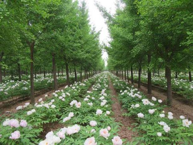 江西森林覆盖率位居全国第二 林下经济助脱贫