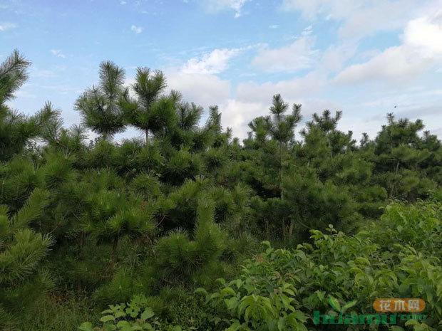 改革创新的新型苗圃典范——信安园林
