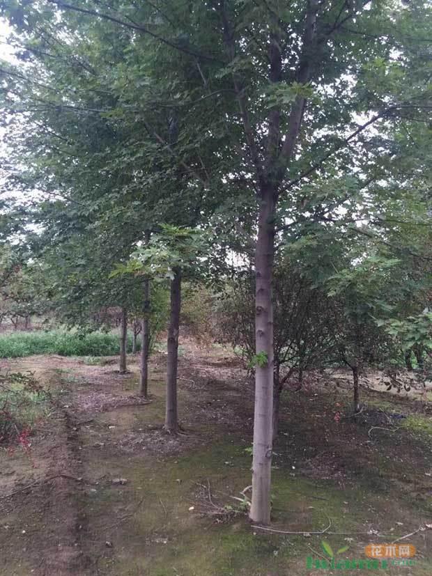 科技创新型苗圃的榜样——久信园林