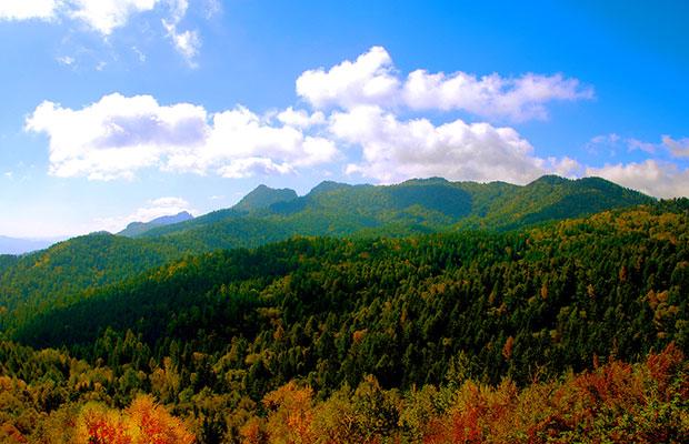 山西:开辟新路径,植树造林成效显著