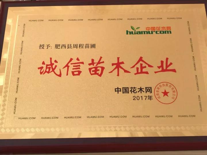 值得信赖的苗木供应商——肥西周程苗木生产基地