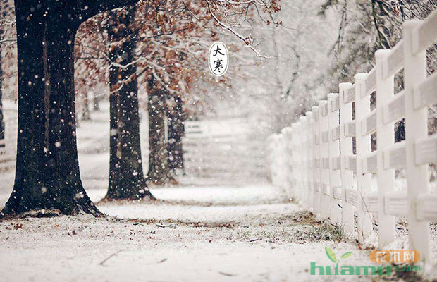 今日大寒|苗木时节 枇杷花开御风寒