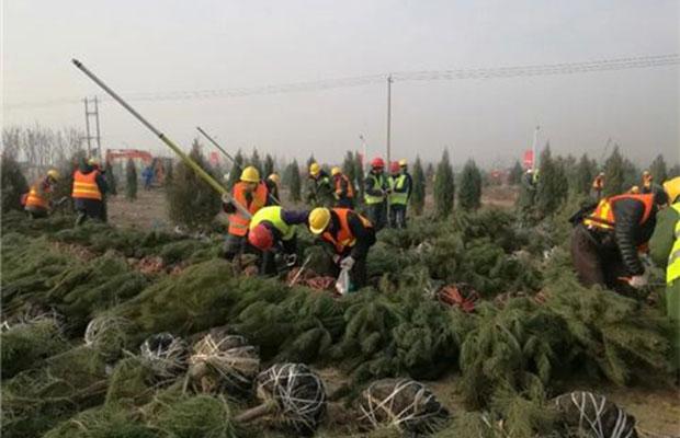 雄安新区:今年十万亩造林工程启动