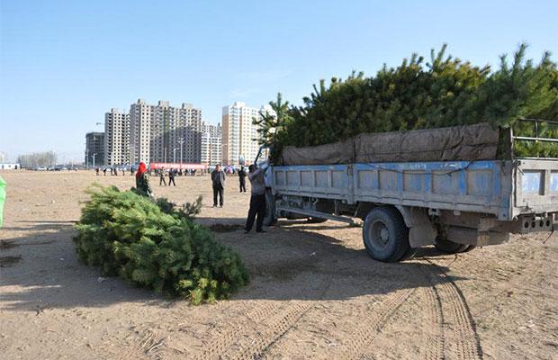 新年苗木生意如何从省钱开始?运输成本原来可以这么省!