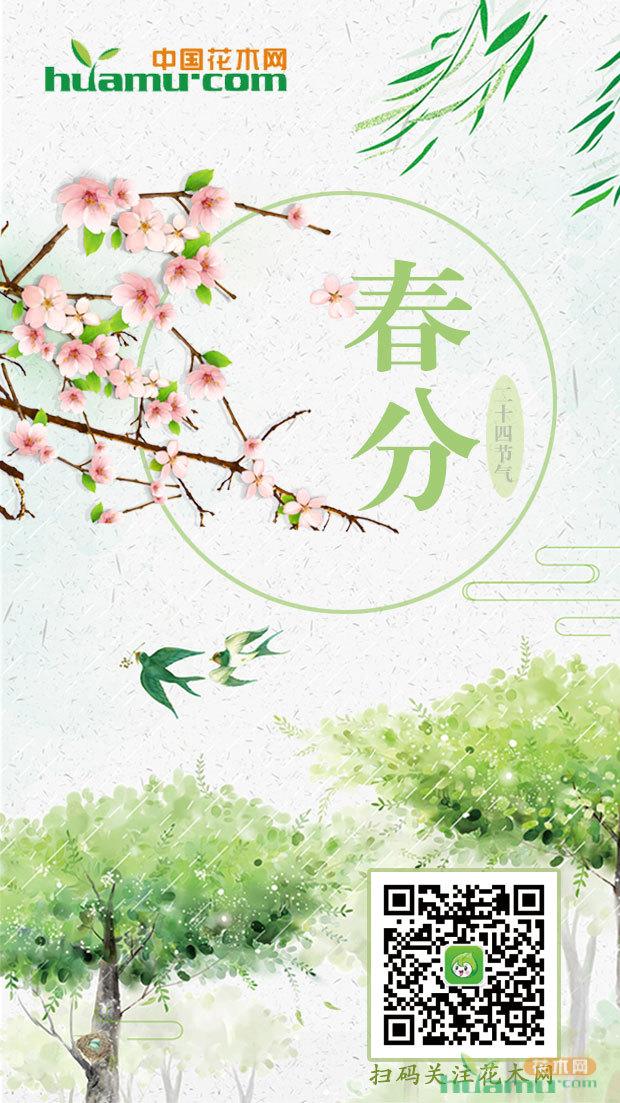 今日春分|苗木时节 桃花粉面笑春风