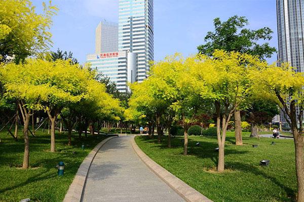 河南《安阳市城市绿化条例》规定了哪些东西?