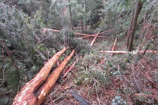 这些人要注意了:擅自采伐林木,贵州最高拟罚五万