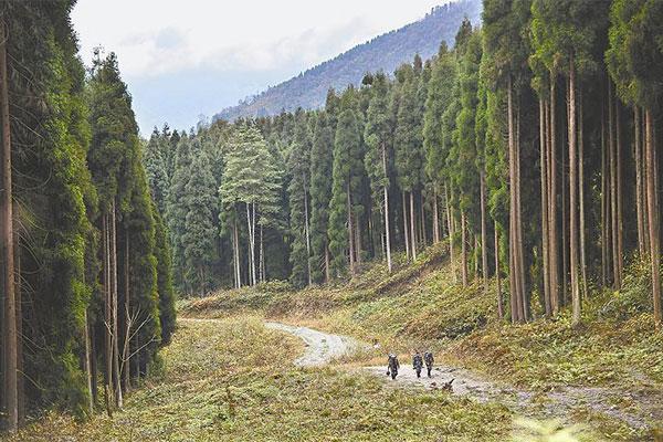 推动森林认证与林业改革发展深度融合