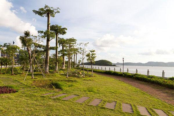 滨海新区超额完成今年绿化任务