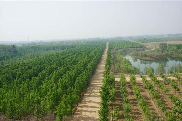 格尔木市今年已完成植树造林5101亩