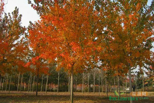 苗木行业又一高潮要来了,这几点一定得记住!