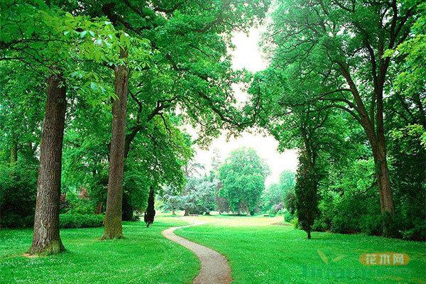 国家wellbet和草原局:到2025年建成300个国家森林城市