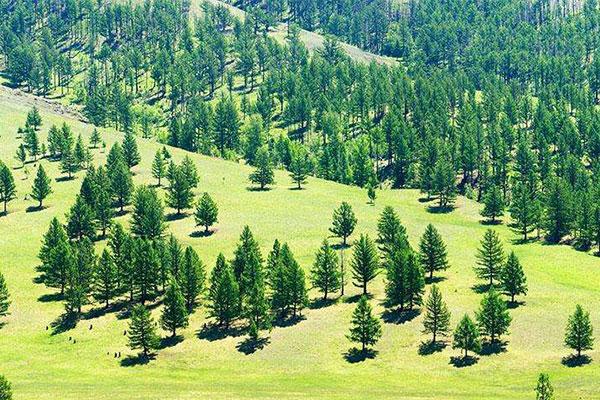 全国林业产业总产值突破7万亿