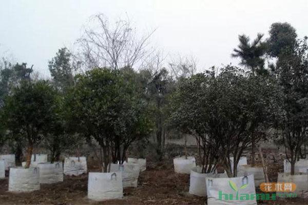未来最受欢迎的栽培方式,容器栽培比传统育苗更省钱省力!