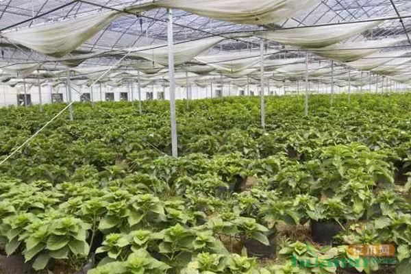 应对花卉产业消费升级,这里有一条高质量发展之路!