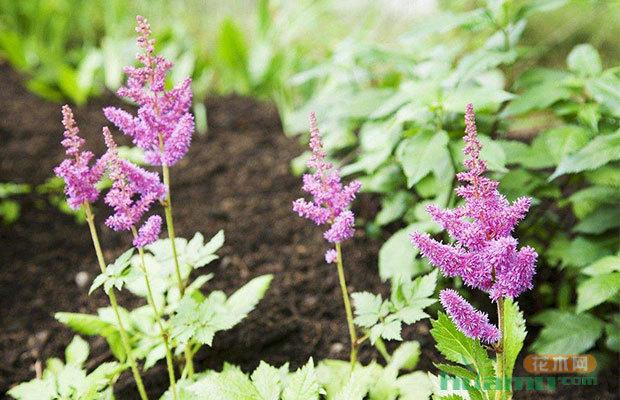 六合彩挂牌这几种乡土花卉引入绿化 未来需求量大